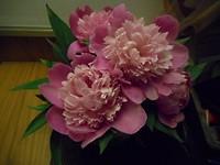 De volgende dag in volle bloei