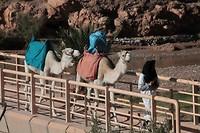 De kameel bij Ait ben haddou