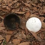 Een bal rubber, naast het bakje, waarschijnlijk om verder te drogen.