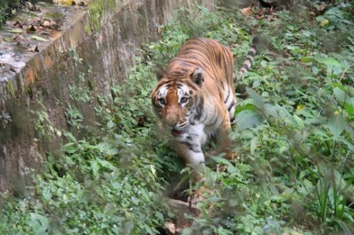 Zoo Darjeeling