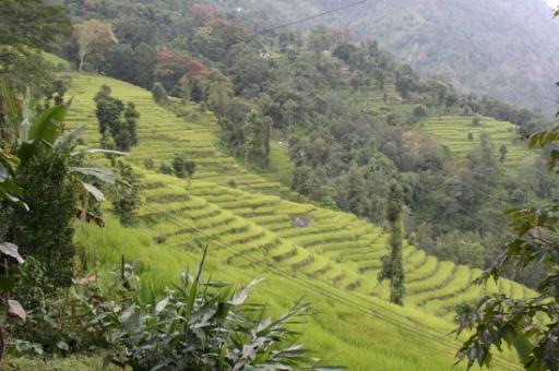 Theevelden Darjeeling