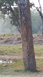 Elephant breeding centre