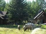 Dag 4-Rocky Mountain National Park (4)