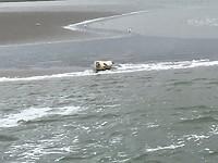 Zelfde zeehond