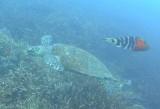 Schildpad in actie