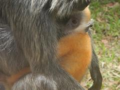 Schattige aapjes