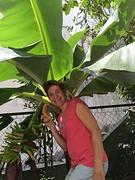 Mijn bananenboom