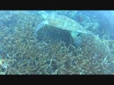 Tioman onder water