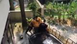 Verhuizen van de trampoline