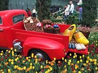 Hollandse tractor?