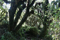 Kronkelige bomen
