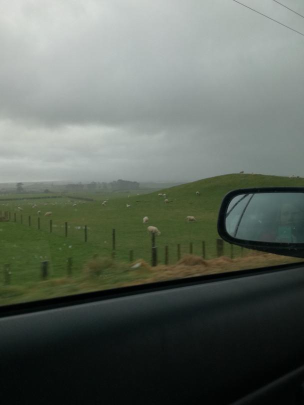 Groene heuvels en schapen