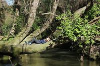 Bledisloe park 4