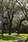 Bledisloe park 5