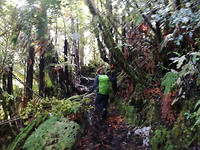 Takapapakurua Falls wandeling