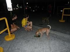 Voer geven aan de straathondjes
