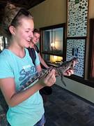 Casually een baby krokodil vasthouden