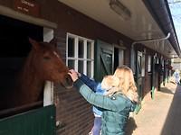 Stichting De Paardenkamp | Soest