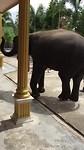 Hutsadin Elephant Foundation | Hua Hin