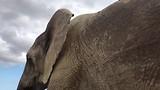 Deze olifant