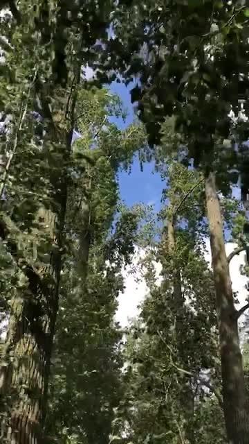 Hoort De Wind Waait Door De Bomen Video Reisverhalen Van Wolter Conny