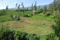 Verticaal boeren