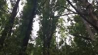 Krakende bomen