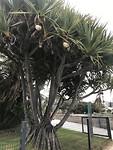 Wat voor Palm is dit