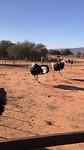bij de struisvogelboerderij