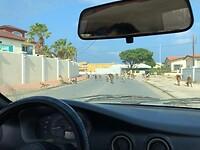 Geiten safari in Aruba