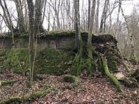Midden in het bos.