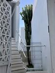 Cactus van wel 10m hoog!