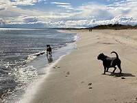 Zij vinden het ook weer fijn op het strand.