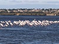 Groepje flamingo's.
