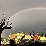 Regenboog boven de camping.