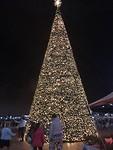 Kerstboom bij het Victoria Waterfront