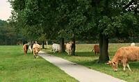 201019 koeien los