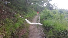 Vanmorgen gruwelijk veel regen. Foto van Maik die achter me liep.