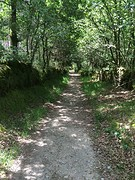 Prachtige bospaden vandaag.