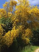 Veel geel gezien vandaag.