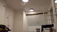 Vleermuizen op m'n kamer