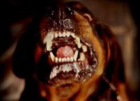 Die heeft geen tandarts nodig!!