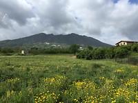 Vanochtend frisse blik op de Vesuvius
