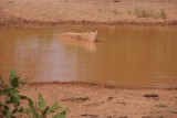 Burkina Faso..yes weer varkensvlees