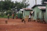 wrattenzwijnen en bavianen in het personeels dorp