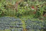 vruchtbaar land