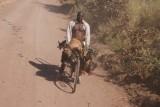kippen, geit en schaap mee op de fiets