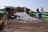 kleine visjes uit Lake Malawi