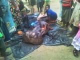 nijlpaarden slager