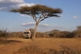 overnachten onder de acacia